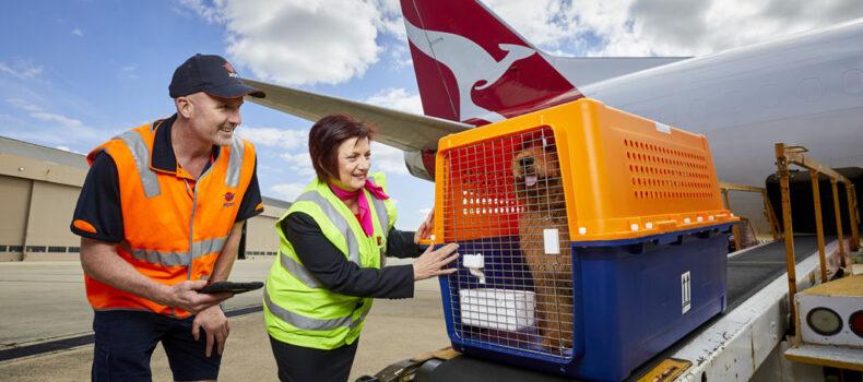 حمل حیوانات خانگی با هواپیما