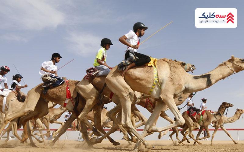 مسابقه شتر سوار در پیست بزرگ 10 کلیومتری العین