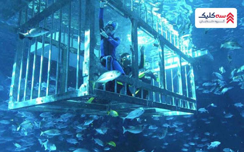 تجربه گشت در اعماق اقیانوس در آکواریوم دبی